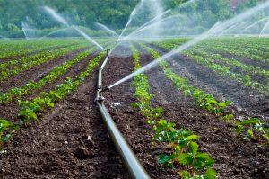 Aufbereitung von Brunnenwasser gegen Eisen, Mangan, Nitrat und Keimen in der Landwirtschaft